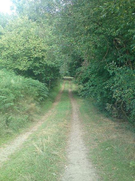 un-chemin-de-Locarn.jpg