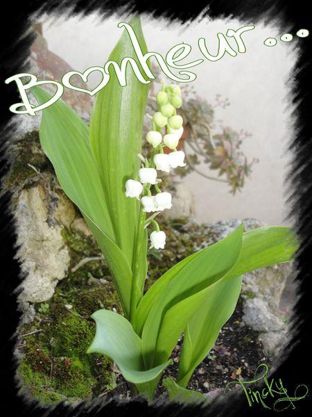 Copie-de-Glycine-LILAS-MUGUETS-PLANTS-DE-TOMATE-Ra-copie-5.jpg