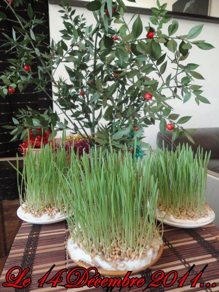 Décembre 2011.Pitoulette.Blé.Houx.Déco Noël Ophrys 018