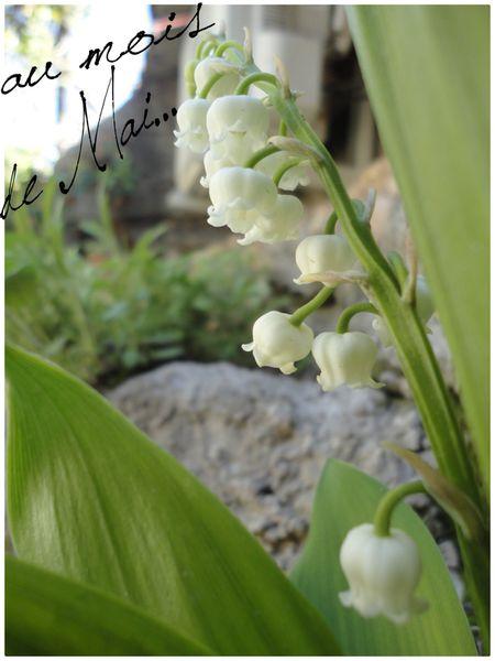 Glycine-LILAS-MUGUETS-PLANTS-DE-TOMATE-Rainette.et-copie-1.jpg