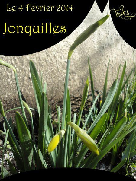 Jonquilles-le-4-Fevrier-2014-103.jpg