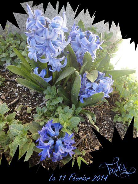 2014-C-Le-11-Fevrier-.Plantes-aquatiques-Jacin-copie-1.jpg