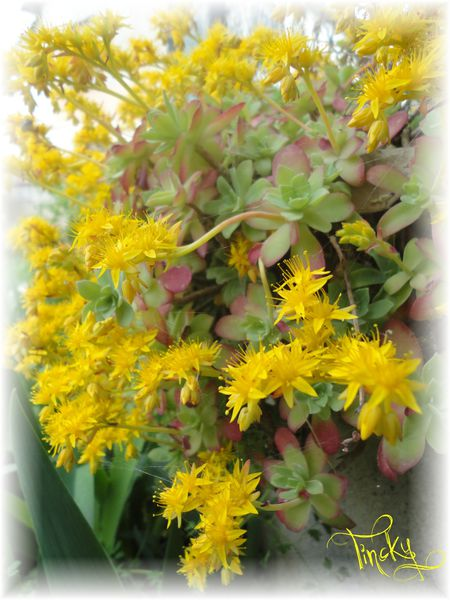 Le-21.03.2014-Plantes-Grasses-Fleuries-065.jpg