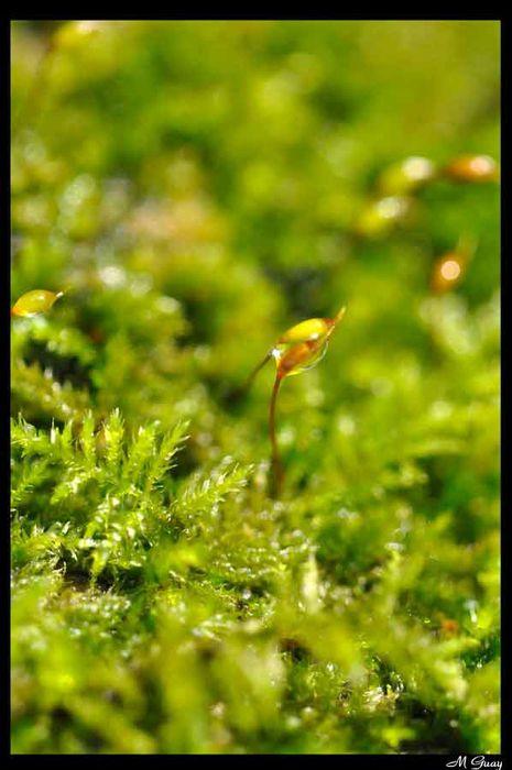 lilliputiens-4487.jpg