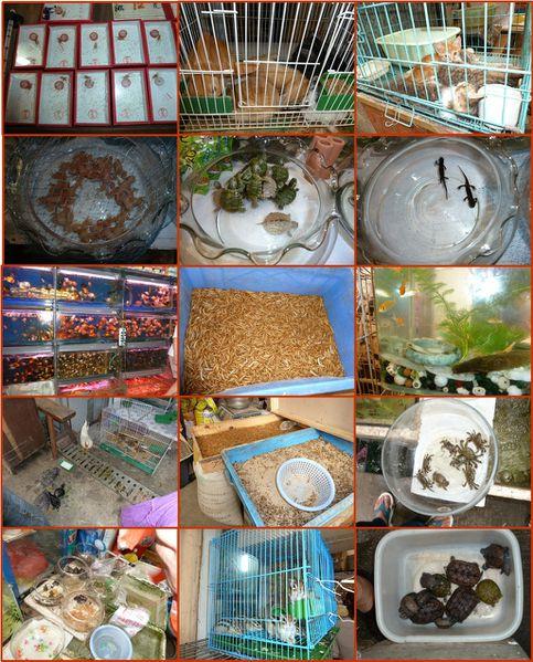 07-shg-marché insectes oiseaux 1