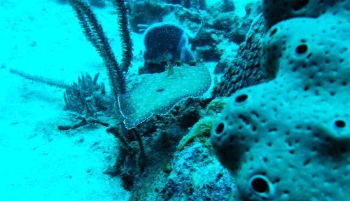 2010 11 02 Carrelet tropical