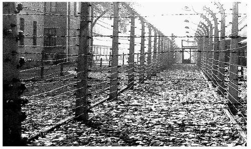 Auschwitz barbelés 2