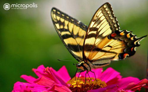 Micropolis Cite Insectes Fond Ecran