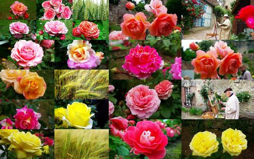 Gerberoy-toutes-images-montage-roses.jpg