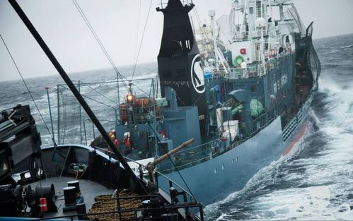 sea-shepherd-5.JPG