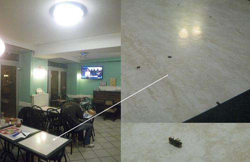 abeilles hommes insectes sur le dos 2013 02 19 19h30 bar Ro