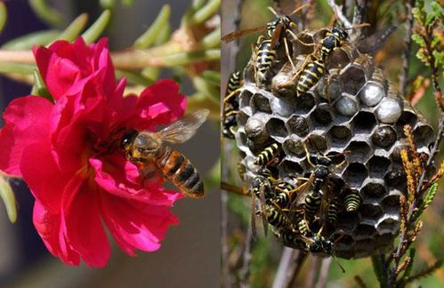 article_abeille-guepes.jpg