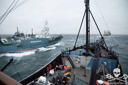 sea-shepherd-3.JPG