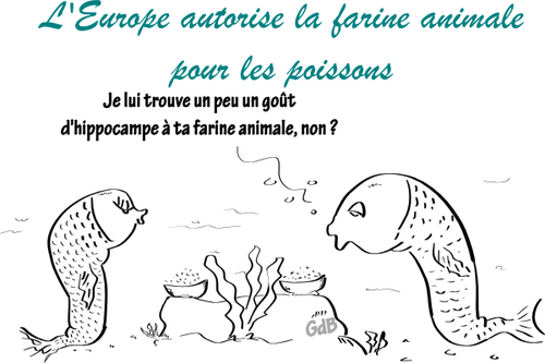 europeFarineAnimalePoissons.png