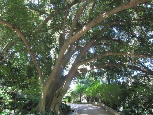 force-tranquille-arbre.JPG