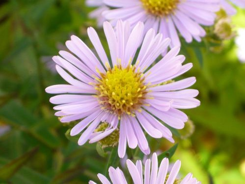 aster4 - reduc