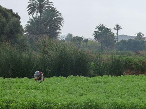 002-Oued-Massa.jpg