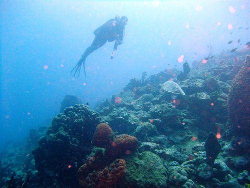 2011 04 09 Aquarium (13) (Grand)