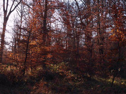 forêt-fontainebleau-103