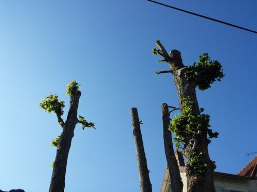 arbres-tondus.jpg