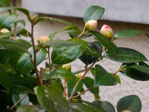 bourgeon-fleur.JPG