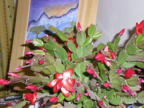 floraison d'automne11 novembre