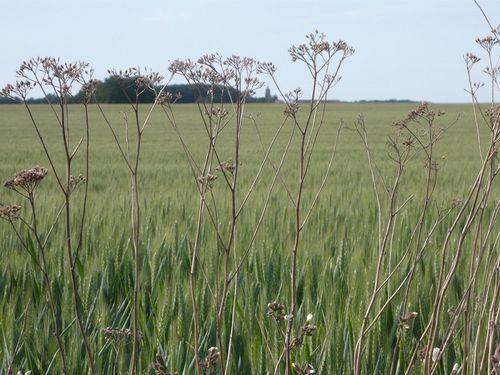herbes-folles---reduc1.JPG
