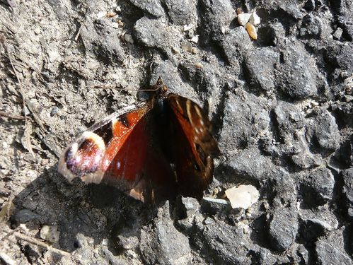 papillon mal en point - reduc