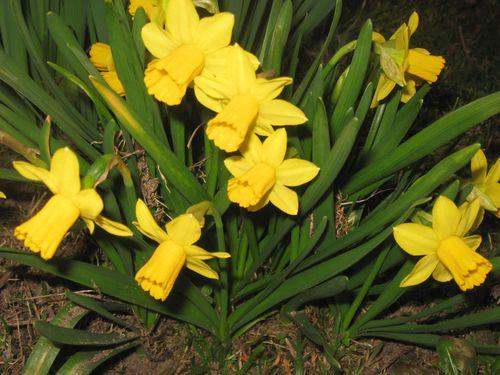 fleurs-7359.jpg