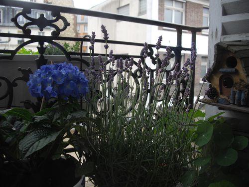 hortencia-lavande-capucine-campanule