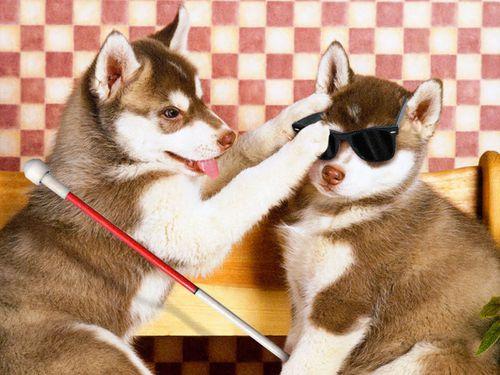 jalousie-entre-chiens.jpg