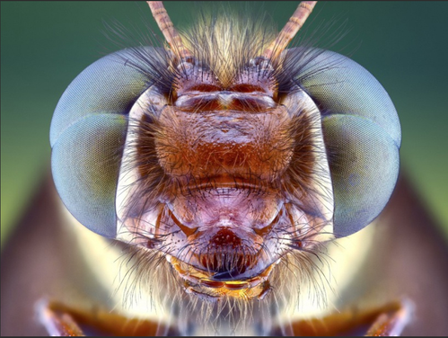 insecte.02.png