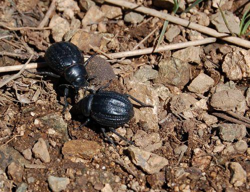 Marocco-2-insetti--scorpioni-ecc 0099 copia
