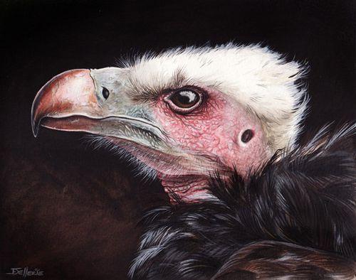 vautour oricou florence dellerie
