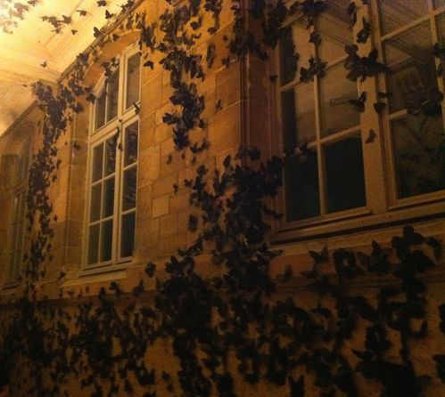 papillonsnuitblanche