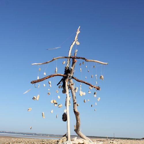 plage et arbre aux cailloux 024