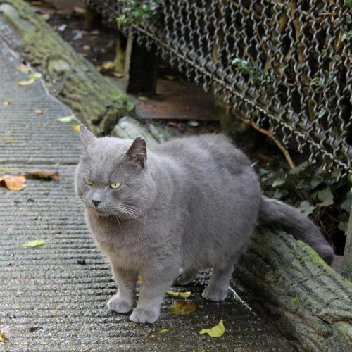 automne-chats 031