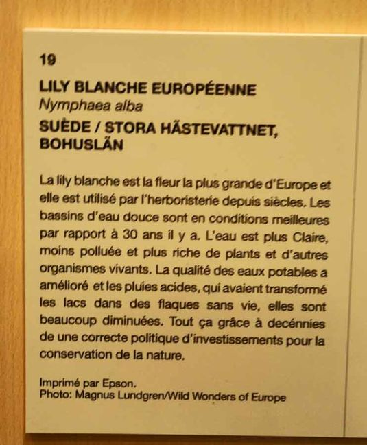 texte-lily-blanche-2203