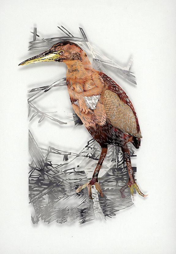 12_tom-gallant-little-bittern-2006-paper-cuts-glass--wood-4.jpg