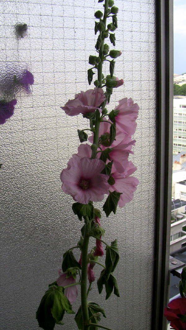 roses012