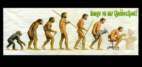 singe ->informaticien