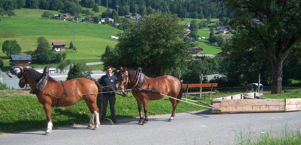 cheval- Megève.photo F. DUVILLARD (2)
