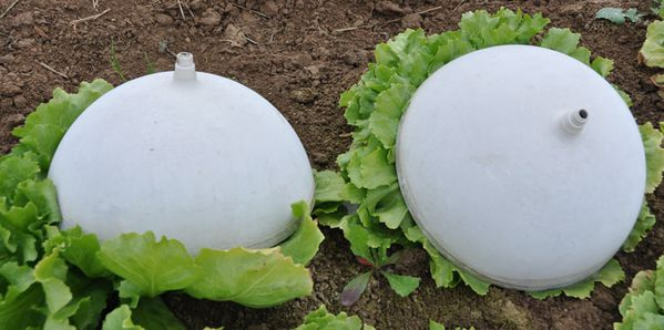 salade-04011-060