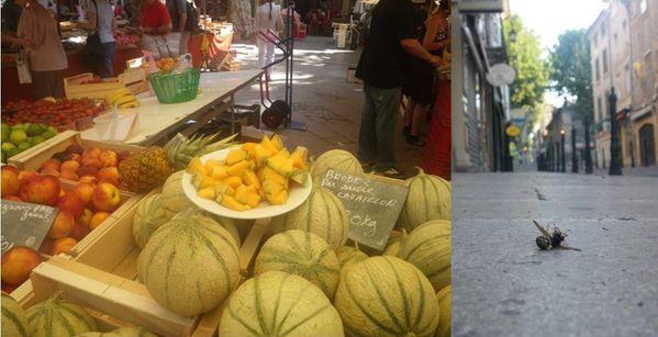 Lagarde-melon-guepe.jpg