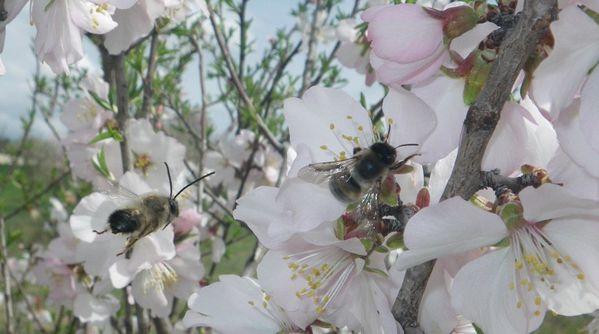 abeilles-coup-de-grace-appel.jpg