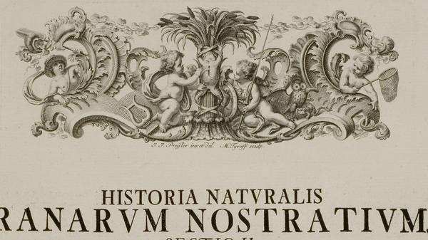 Roesel Ranarum nostratium sectio II putti dissection