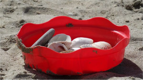 coquillages-ramasses-a-la-plage.jpg