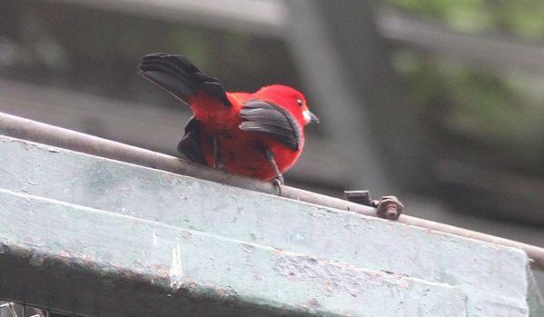 oiseaux 9542