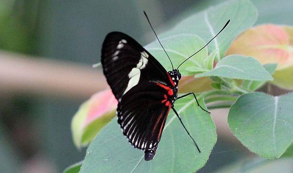 10-aout-2012-papillons-La-Queue 0808