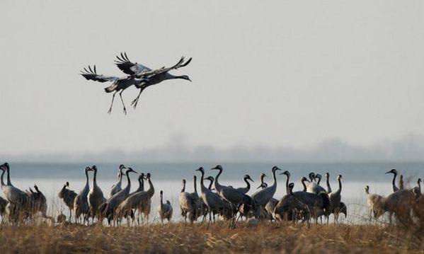 oiseaux-der.jpg